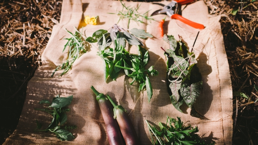 Garden harvest. Image by Alex Carlyle.