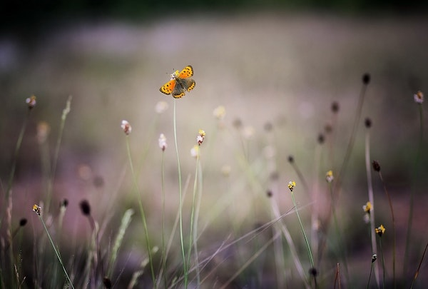 bloom-blossom-blur-128342.jpg