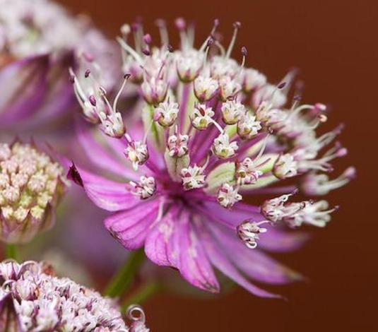 flower pic .jpg