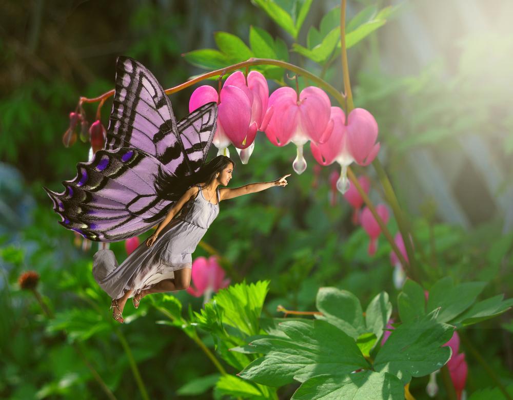 ButterflyVL.jpg