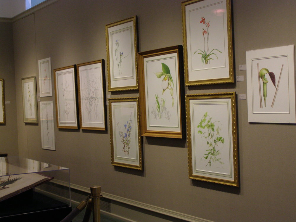 Heeyoung Kim: Native Plants  of the Woods and Prairies - Among the masters including John James Audubon, Pierre-Joseph Redoute and Margaret Mee, Heeyoung's works were exhibited as the first and only living artist in this renowned natural history art gallery. Chicago, IL, 03/27 - 05/31, 2015. Below is a slide show from the exhibit.