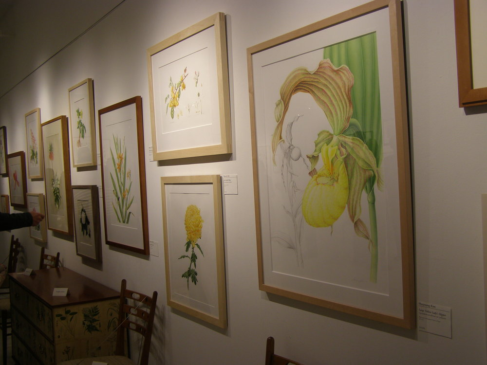 Best in the Show Award- HSNY/ASBA - Horticultural Society of New York and the American society of botanical artists host one of the finest botanical art exhibits. Heeyoung has been in the show in 2008, 2010, 2011, 2012, 2013, 2016. She won several awards including Best in the Show, 2012. photo: Display from the exhibit, 2016. The first from the right is Yellow Slipper Orchid by Heeyoung Kim.