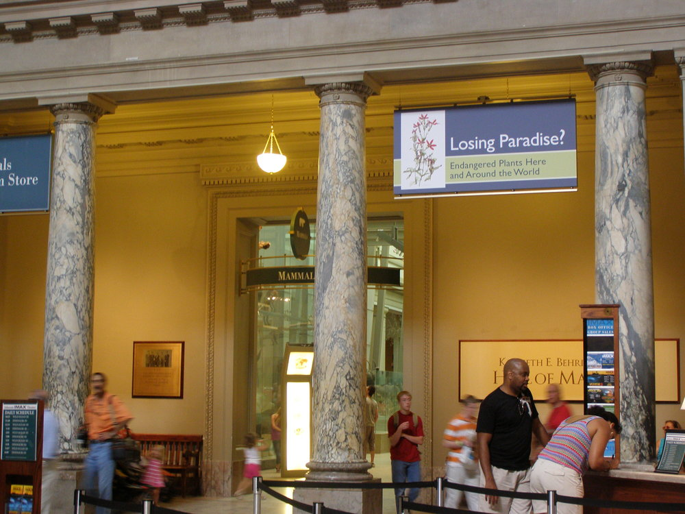 Smithsonian Natural History Museum - The American Society of Botanical Artists and NMNH collaborated a traveling juried botanical art exhibition with paintings of endangered species from around the world. The exhibit traveled 5 venues including Smithsonian museum.Royal Catchfly, Silene regia, a federally listed endangered prairie plant, by Heeyoung Kim, was chosen for the exhibit banner and invitation card at Smithsonian, 2010.