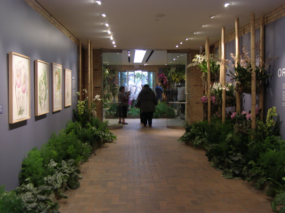 A Passion for Orchids and Conservation - 6 paintings of orchids were exhibited among 10,000 live orchids! At Chicago Botanic Annual Orchid Show, Heeyoung's paintings greeted tens of thousands visitors at the entrance. Only ferns and plants that don't need a lot of water were displayed near my paintings to keep them safe. 3 days of orchid painting workshop was accompanied to this orchid show and exhibit. 2017.