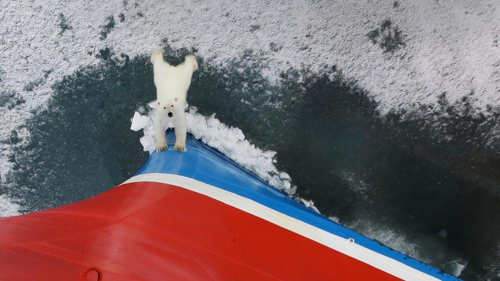 Realm of the Polar Bear Adventure. Learn more from info@enjoyvacationing.com