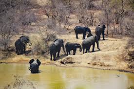 Save 5% on last minute luxury safari packages