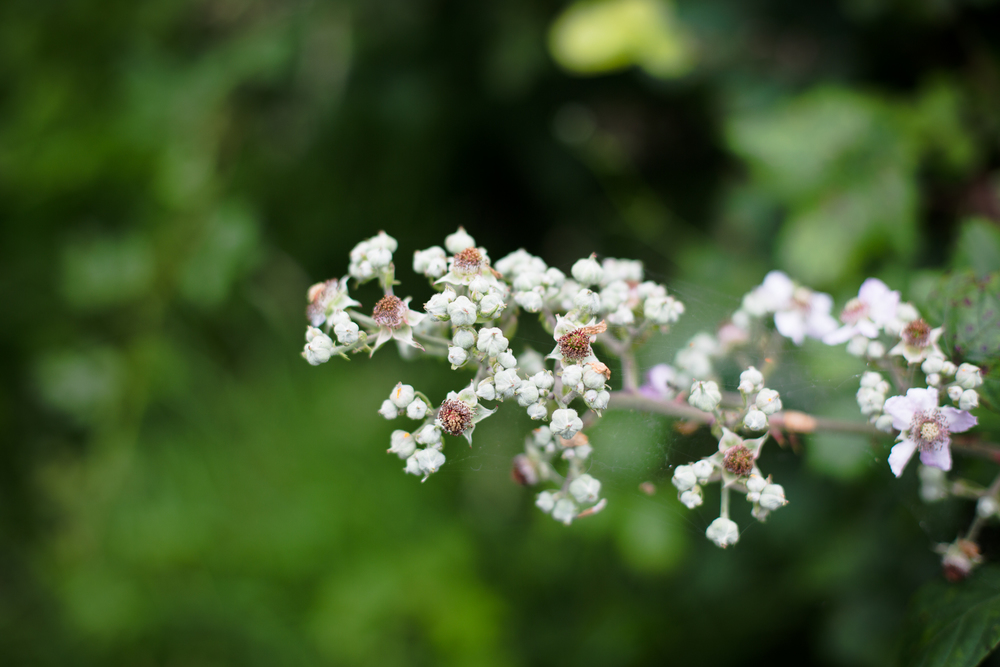 gardenblog-3.jpg
