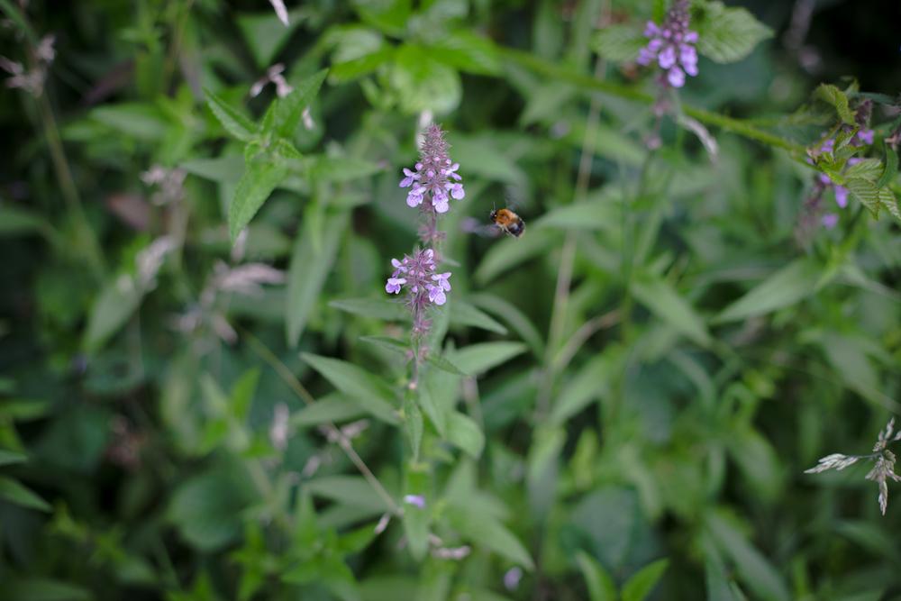 gardenblog-6.jpg