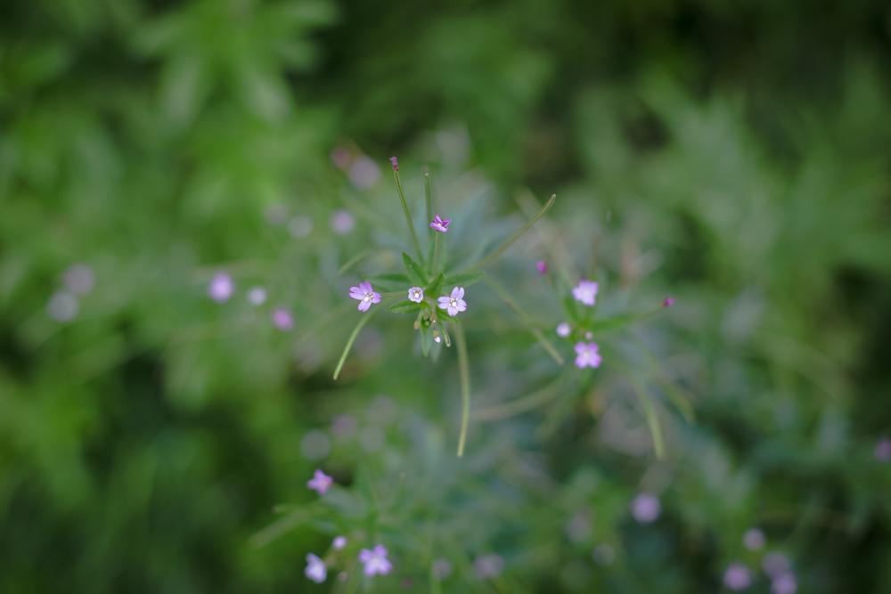 gardenblog-8.jpg