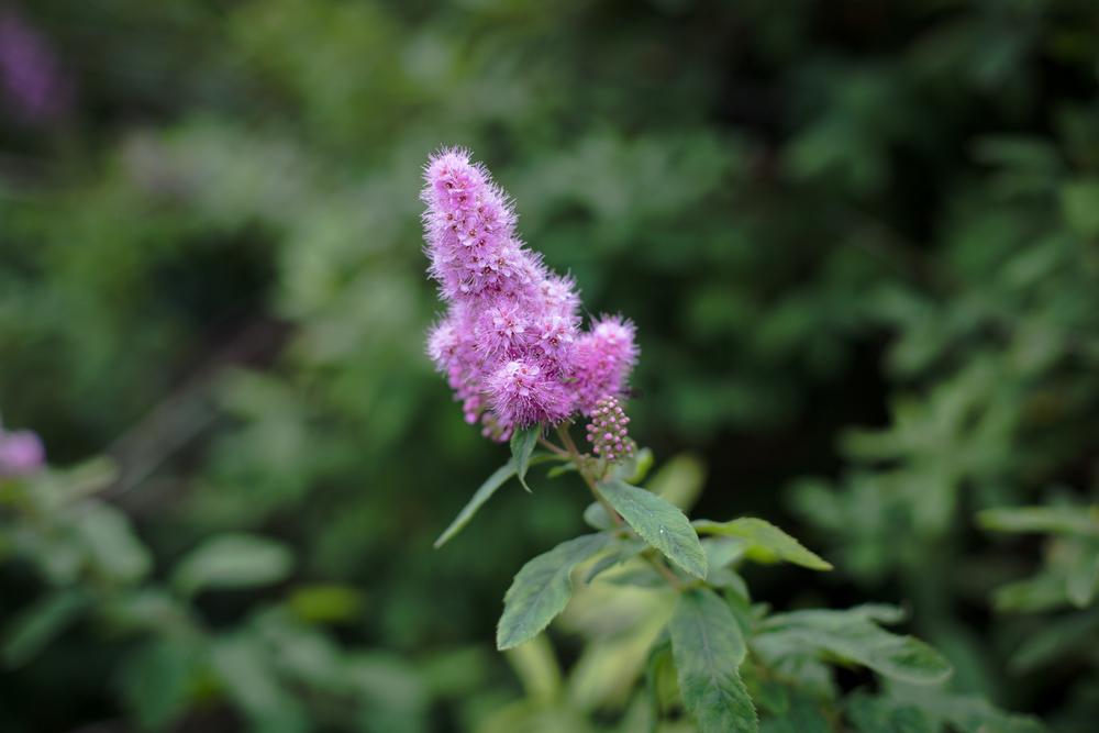 gardenblog-12.jpg