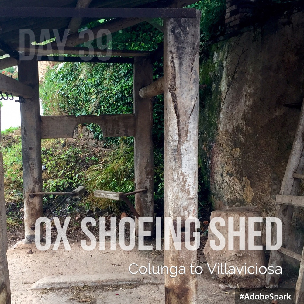 Ox shoeing shed