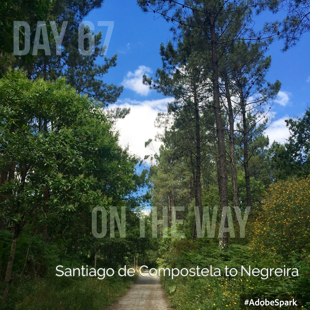 Through oak and pine woods full of birdsong