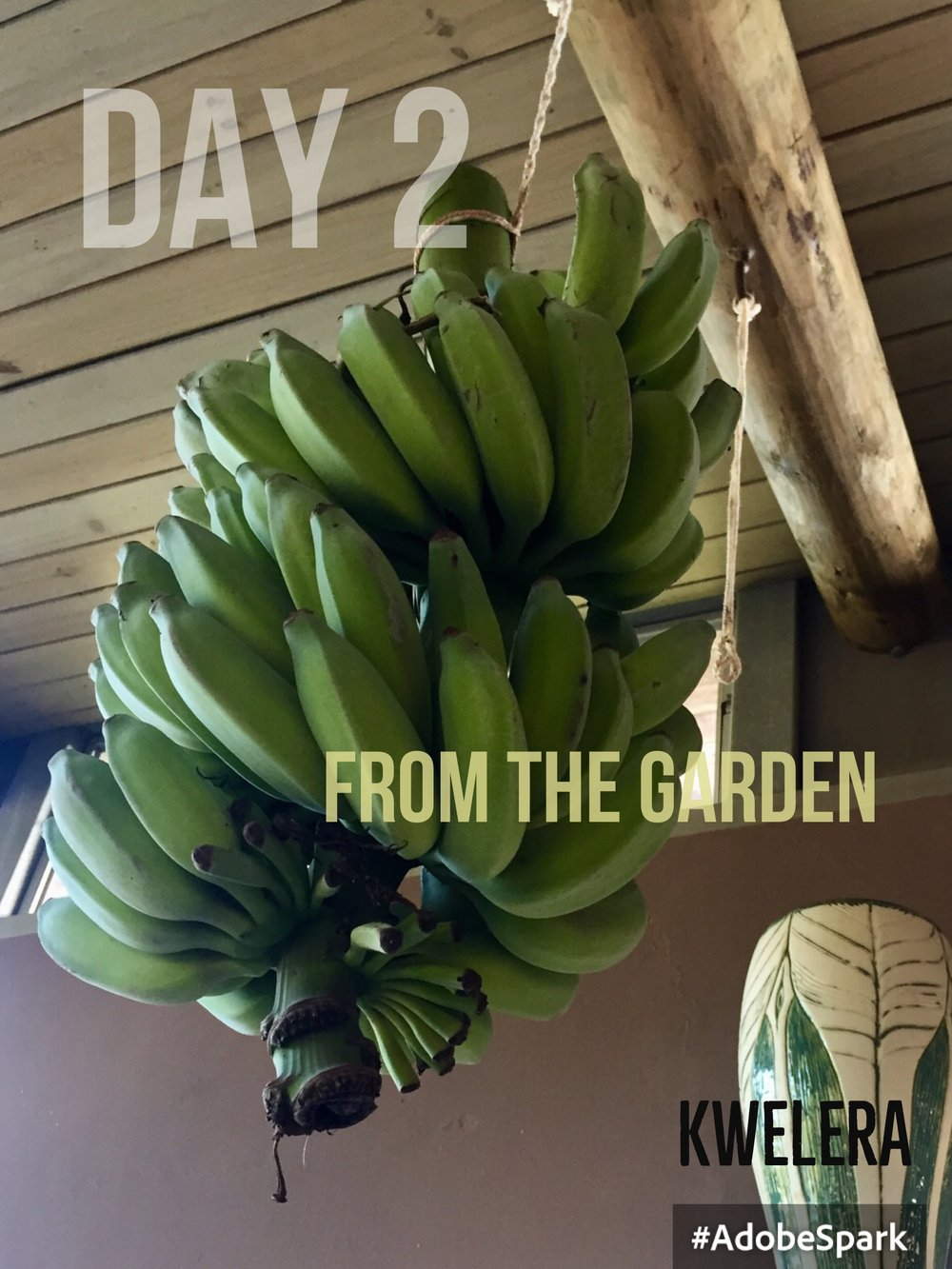 Ripening bananas in the kitchen