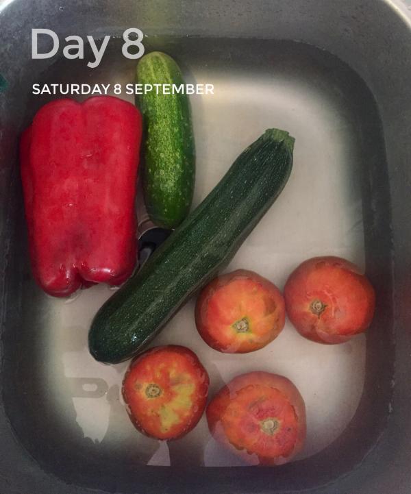 Pimiento, pepino, calabacines y tomates