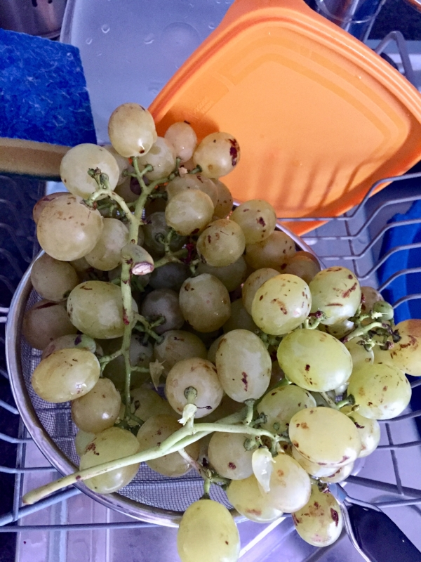 The grapes here are delicious; I bought this homegrown bunch from an old lady sitting on the pavement surrounded by a few plastic crates of tomatoes and green beans.