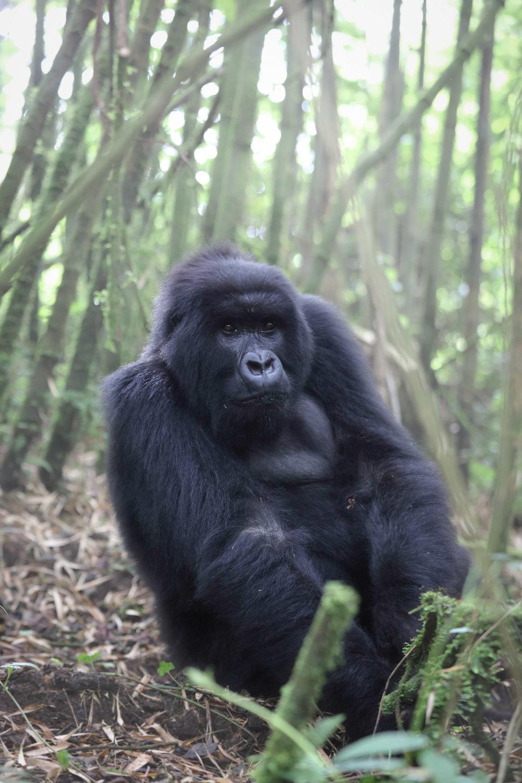 Rwanda-0383.jpg