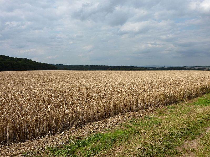 799px-Westow_Fields.jpg