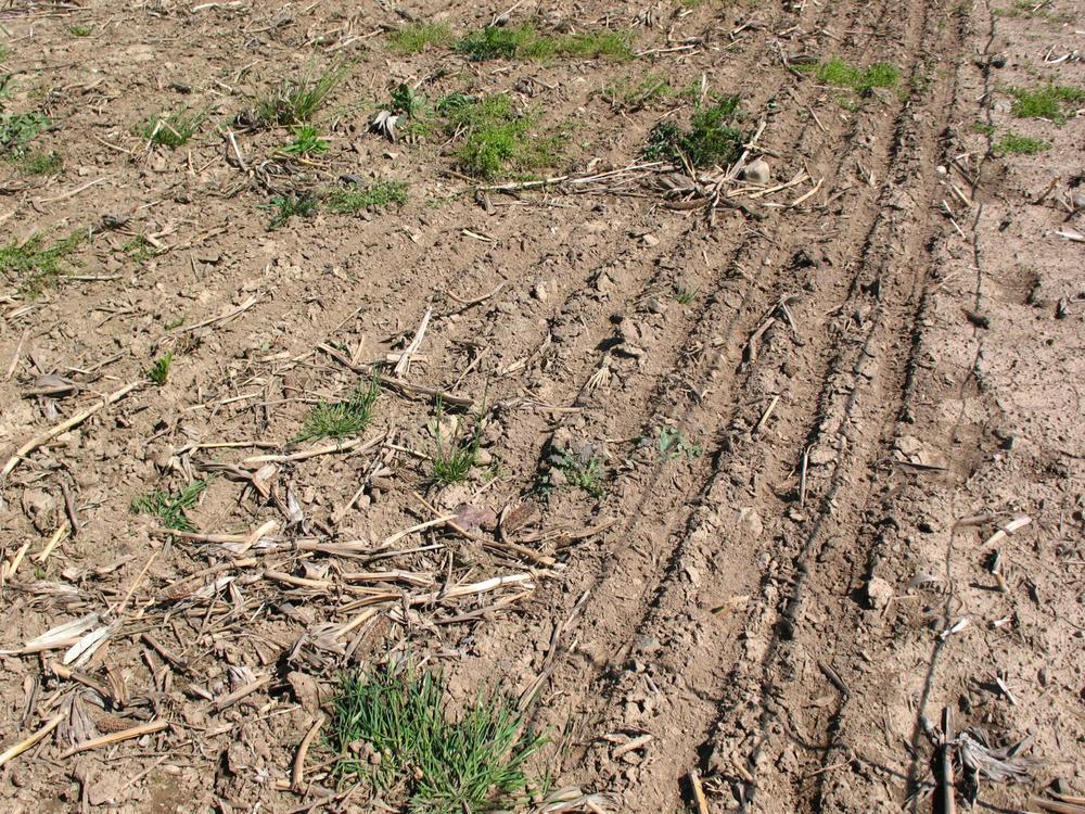 Seeding-Pics-025_1632x1224.jpg