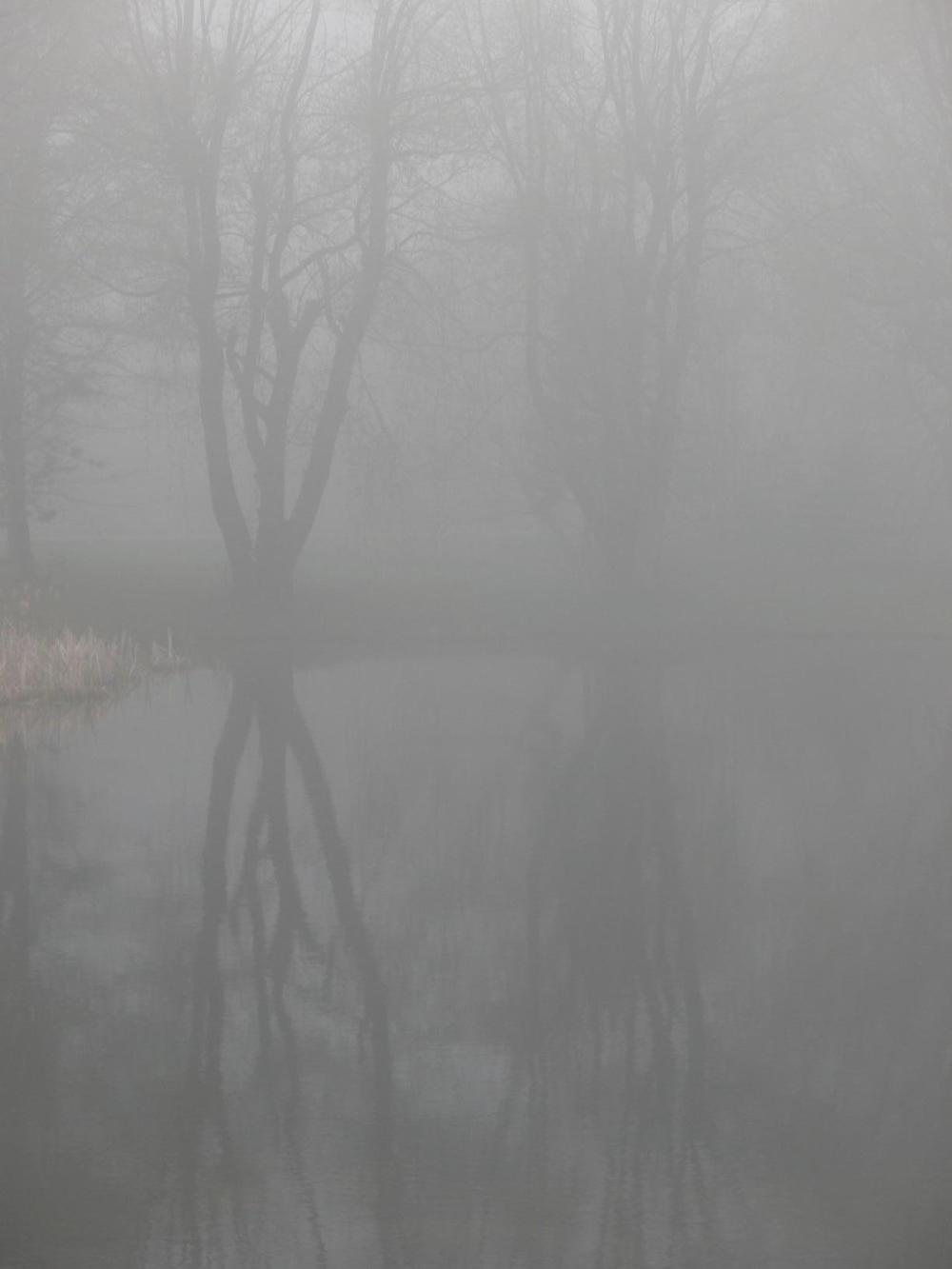 Willows-in-the-mist.jpg