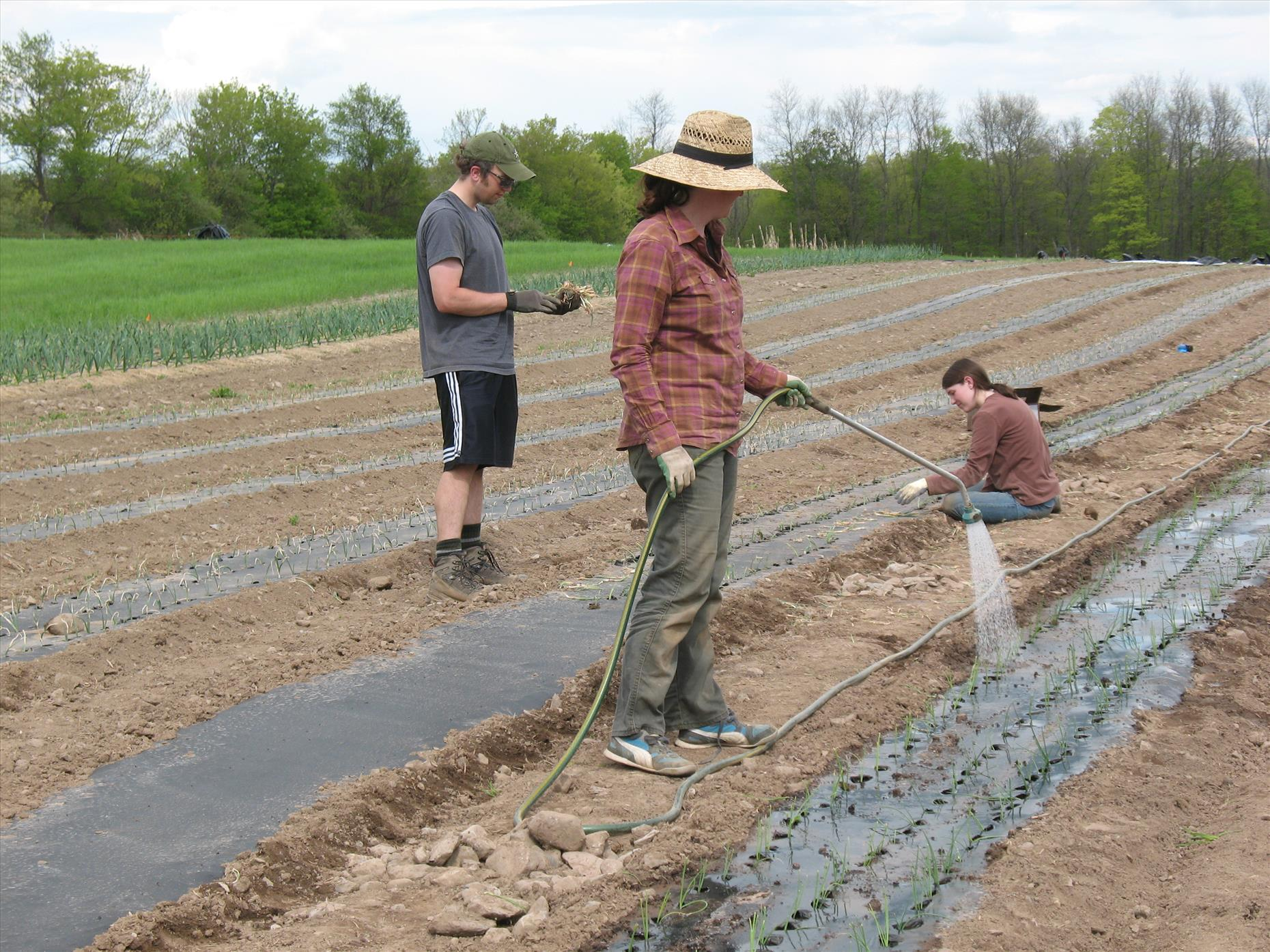 Thanks to our great volunteers--John, Mary, and Ben--who helped us plant onions, potatoes, and more.  Thanks too to everyone else who's come out to the farm to help plant these past few weeks!