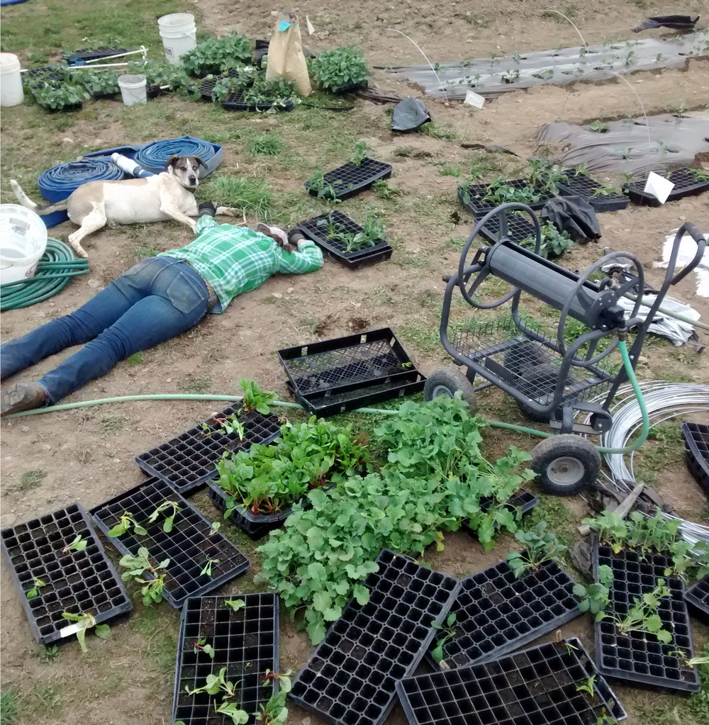 Kale Planting Aftermath