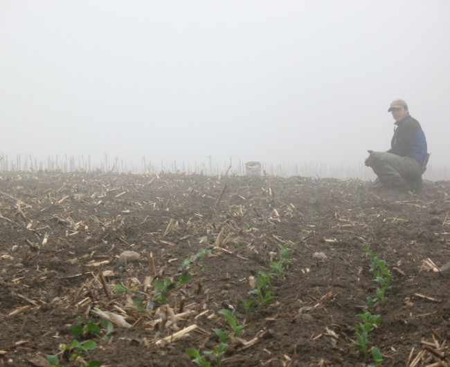 We always end up planting that early chard in the mists!