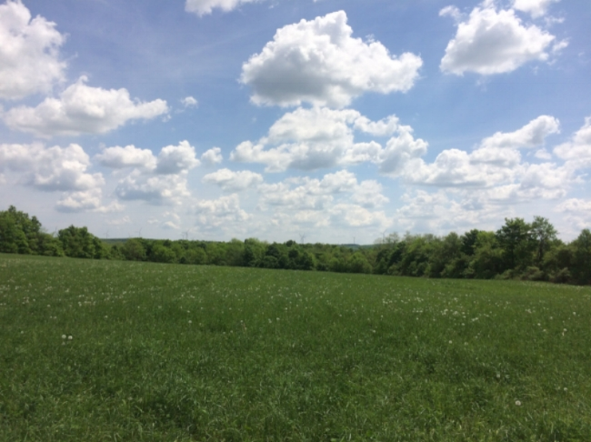 High May Day--rich pasture grasses, wind in the windmills, and glorious sunny skies!