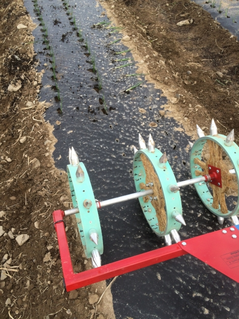One of this year's new tools--a rolling row marker to save us time planting. We love it!