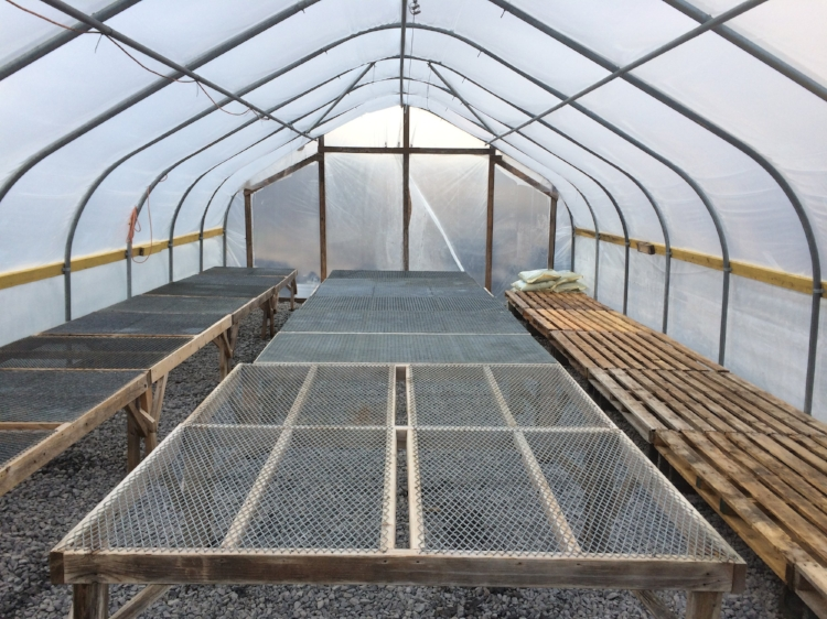 A freshly scrubbed and sanitized greenhouse to start off the season!
