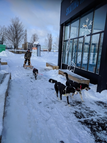 Natrel-dogs.jpg
