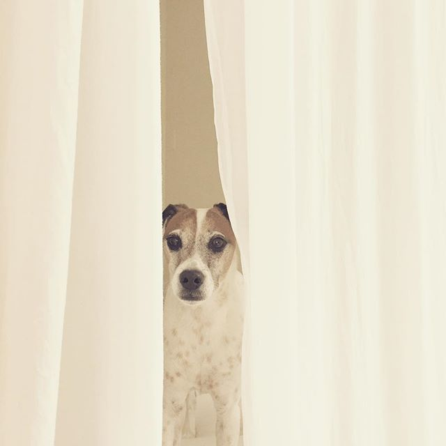 Peek-A-Boo-Bundu