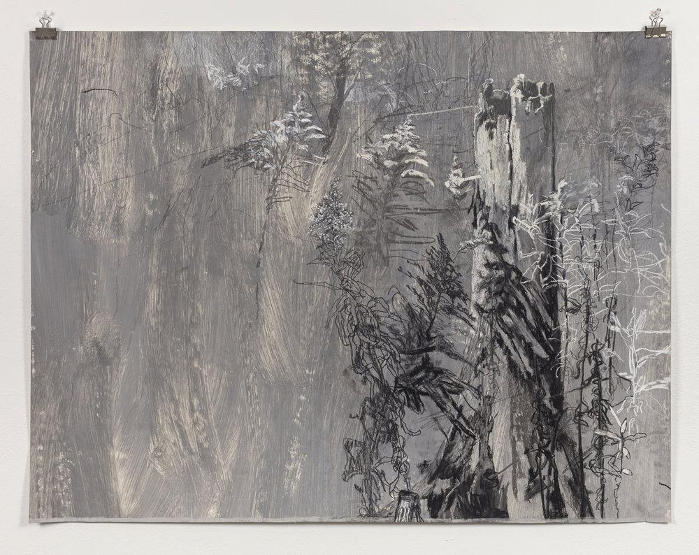 Skokie Lagoon II   2017, Pastel on Paper, 32in x 42in