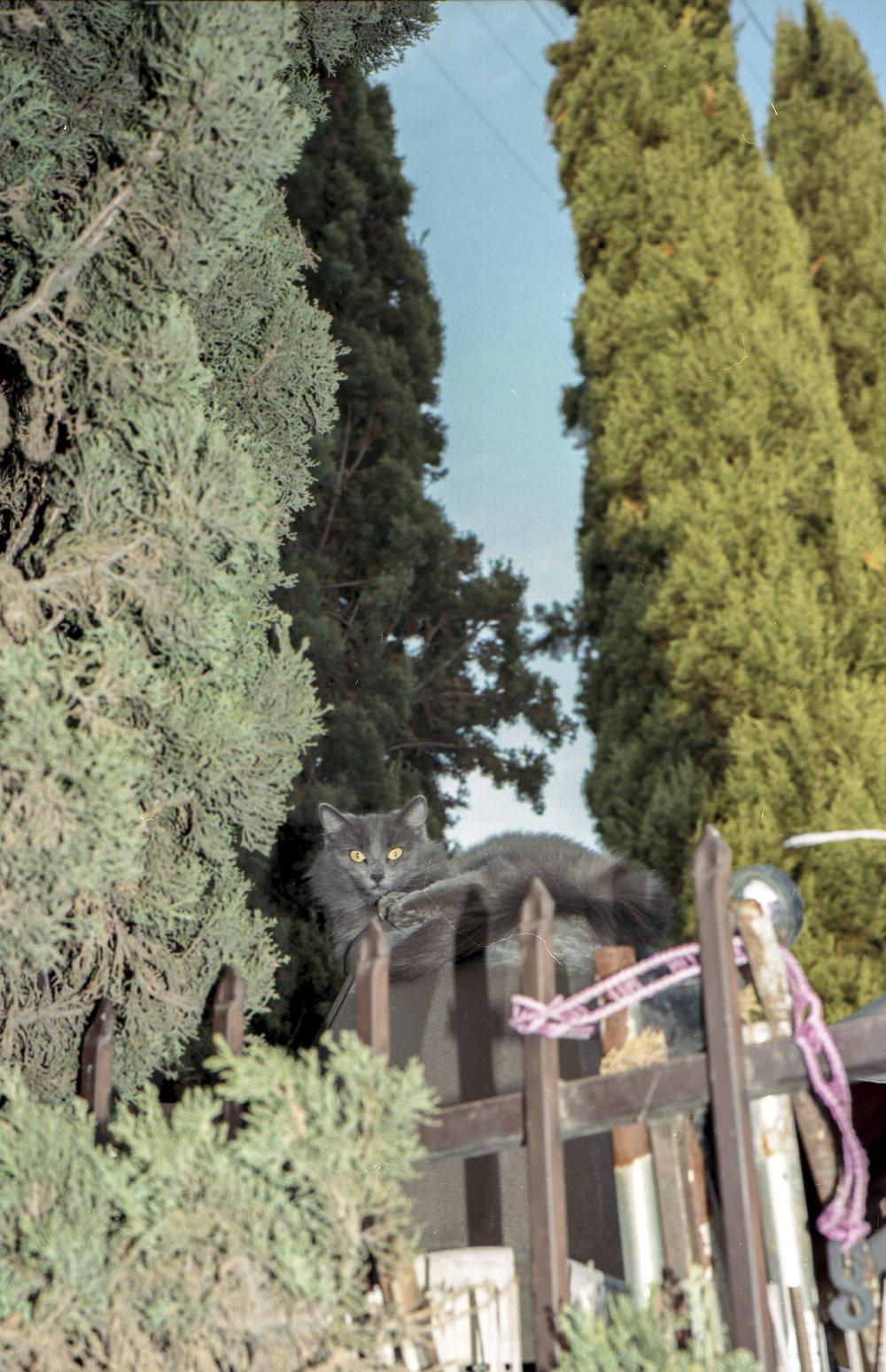 scan006-3.jpg