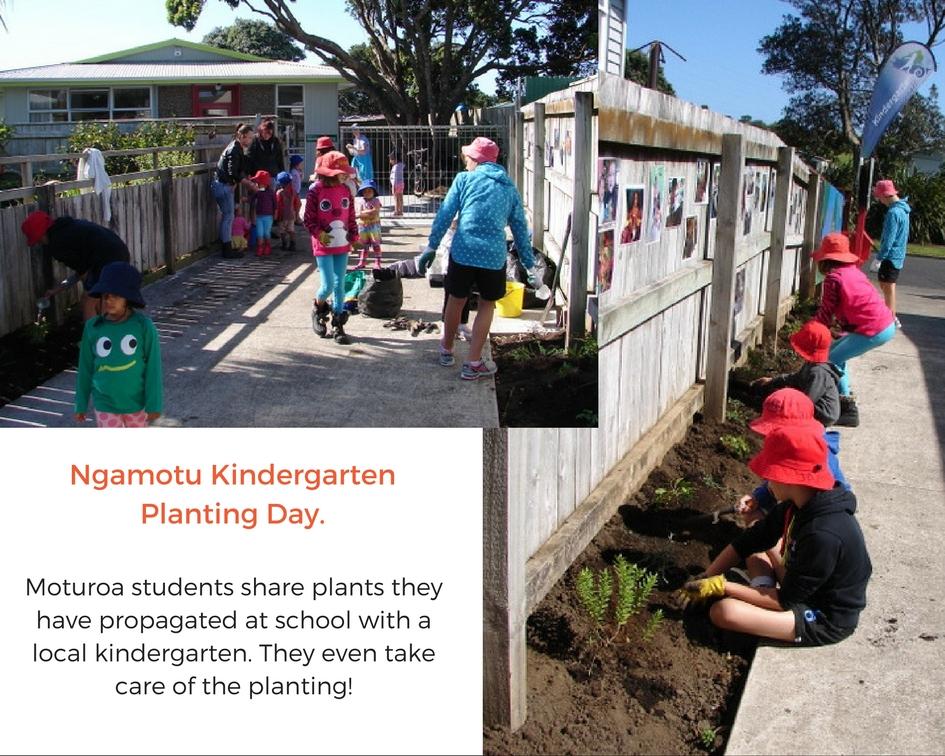 Ngamotu kindergarten planting day. Moturoa students