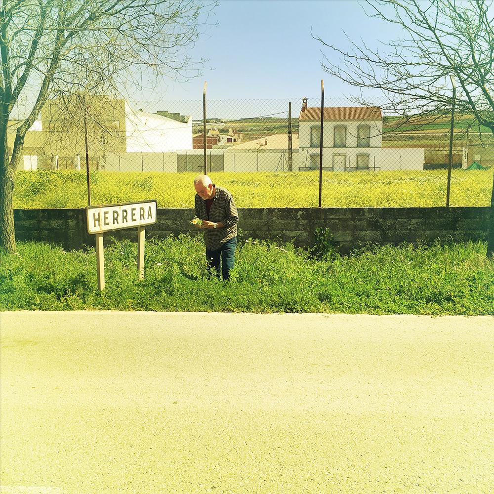 Dad picking flowers-Herrera-1.jpg