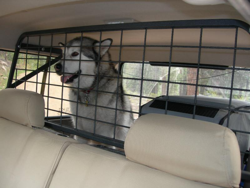 cargo_doggy.jpg