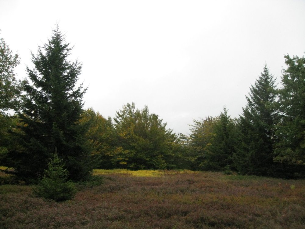 Dolly Sods 09-08 036.jpg