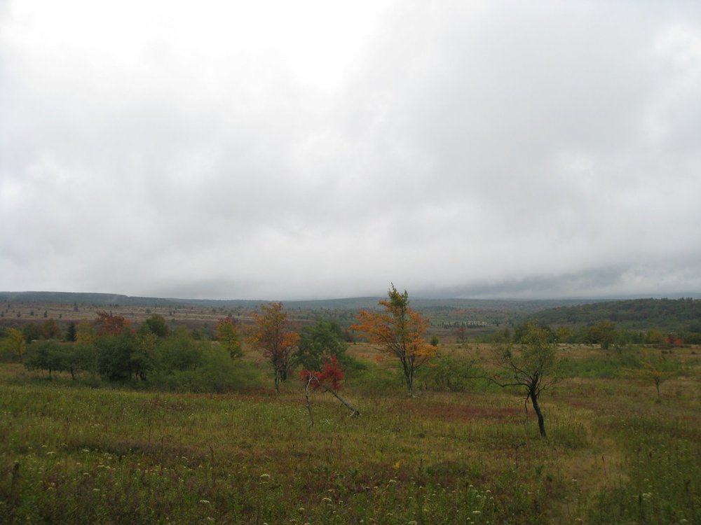 Dolly Sods 09-08 046.jpg