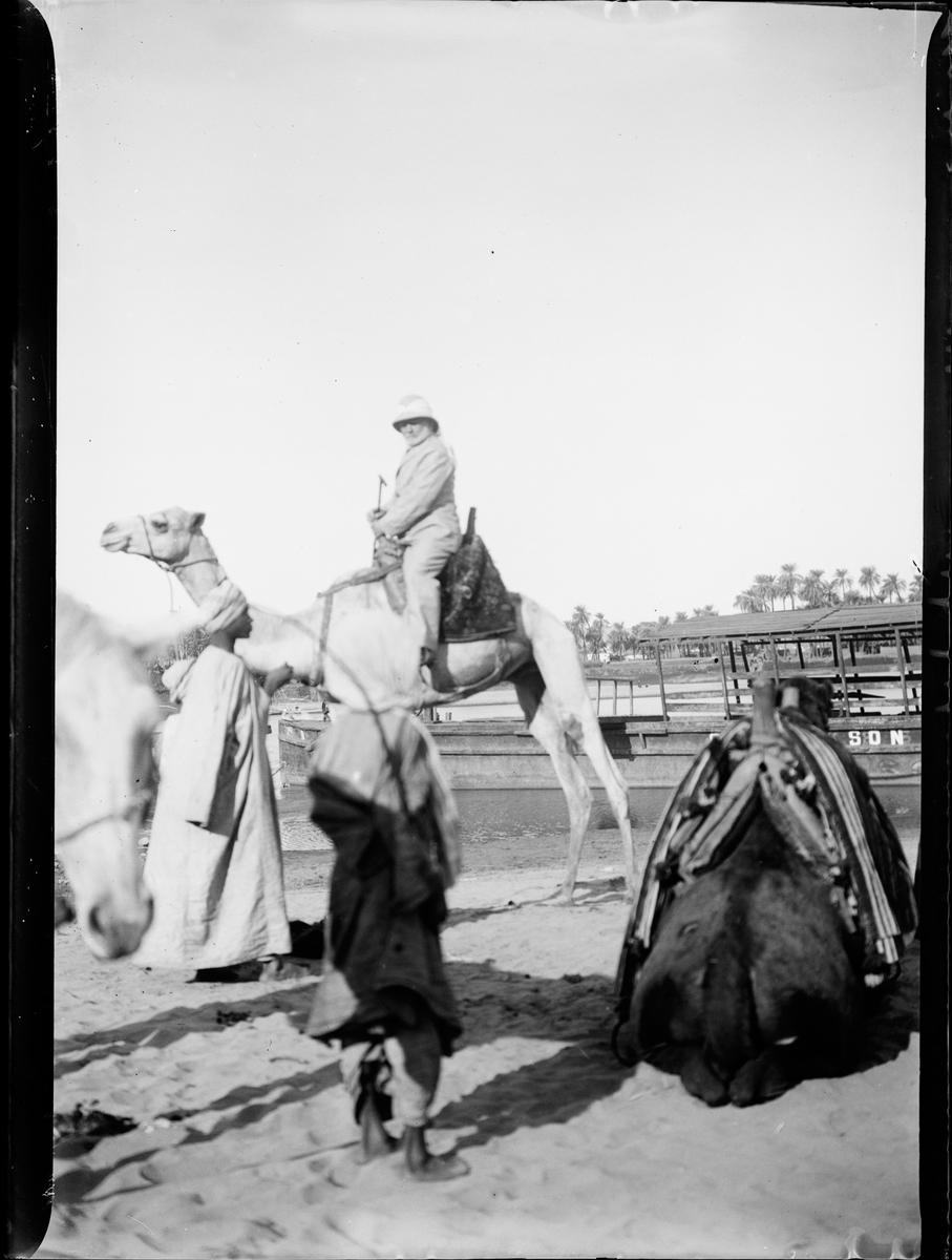 """""""HCM paa Kamel"""". Bildet er   trolig tatt mellom 1885-1905 i Egypt. Påskrift påesken forteller om mange eksotiske inntrykk """"Arabere 1, Dragoman 2, Dahabijer 1, Børn fra Phila 1, Første Katarakt 1, Familien paa Kameler 3, Bischariner 3, Negerbørn 1, Krokodille 1, Pappa, Ba paa Esel 1."""""""