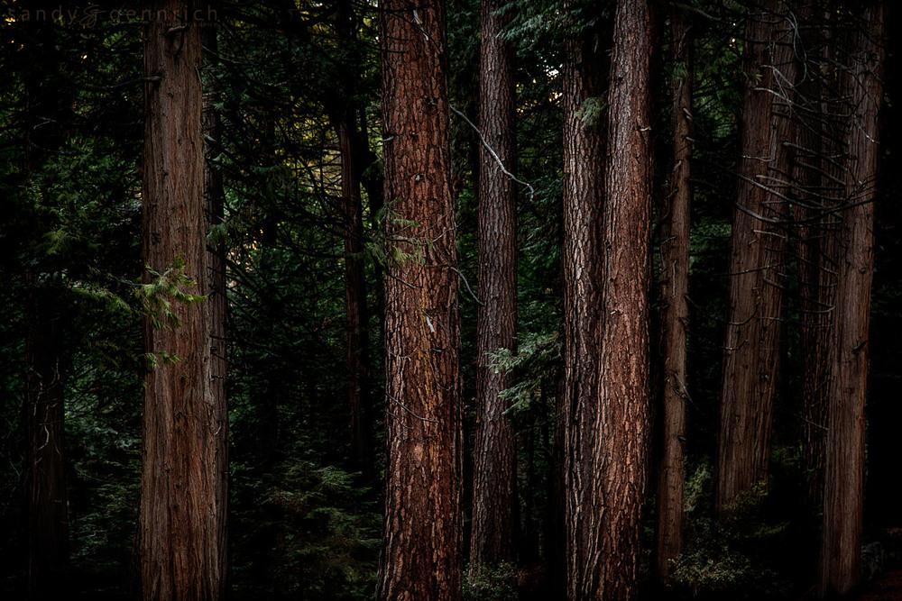 20150213-32470-5DM3-Yosemite-CA-.jpg