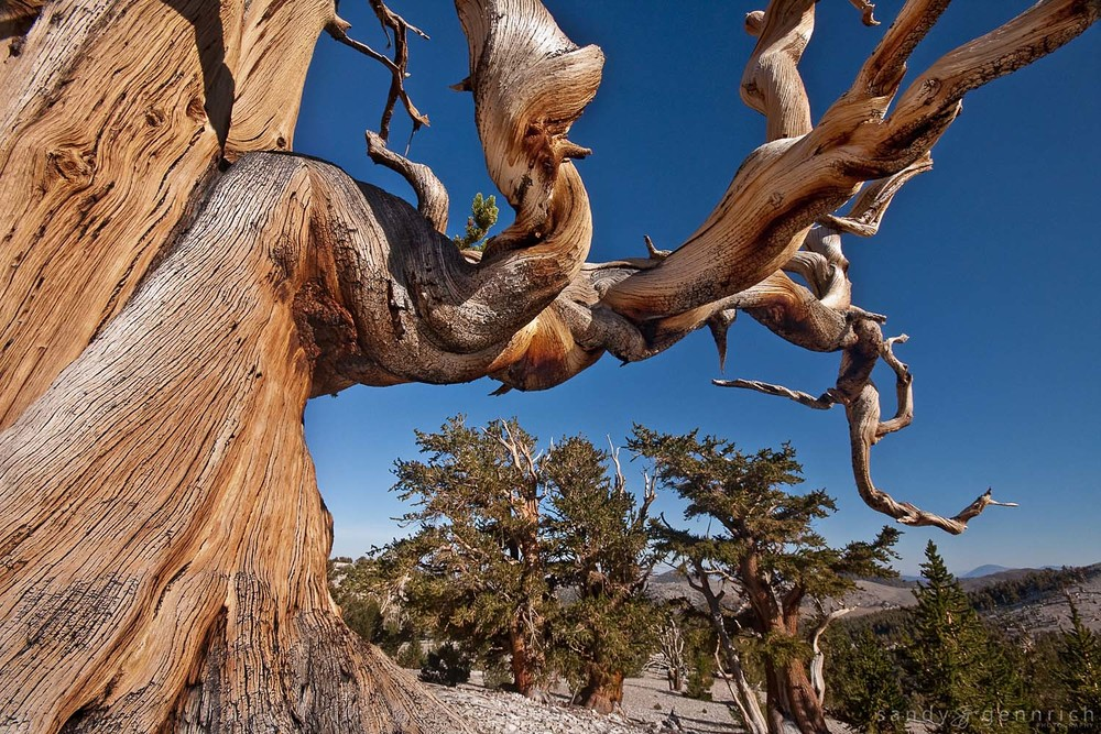 Bristlecone Arch - White Mountains - Bishop CA