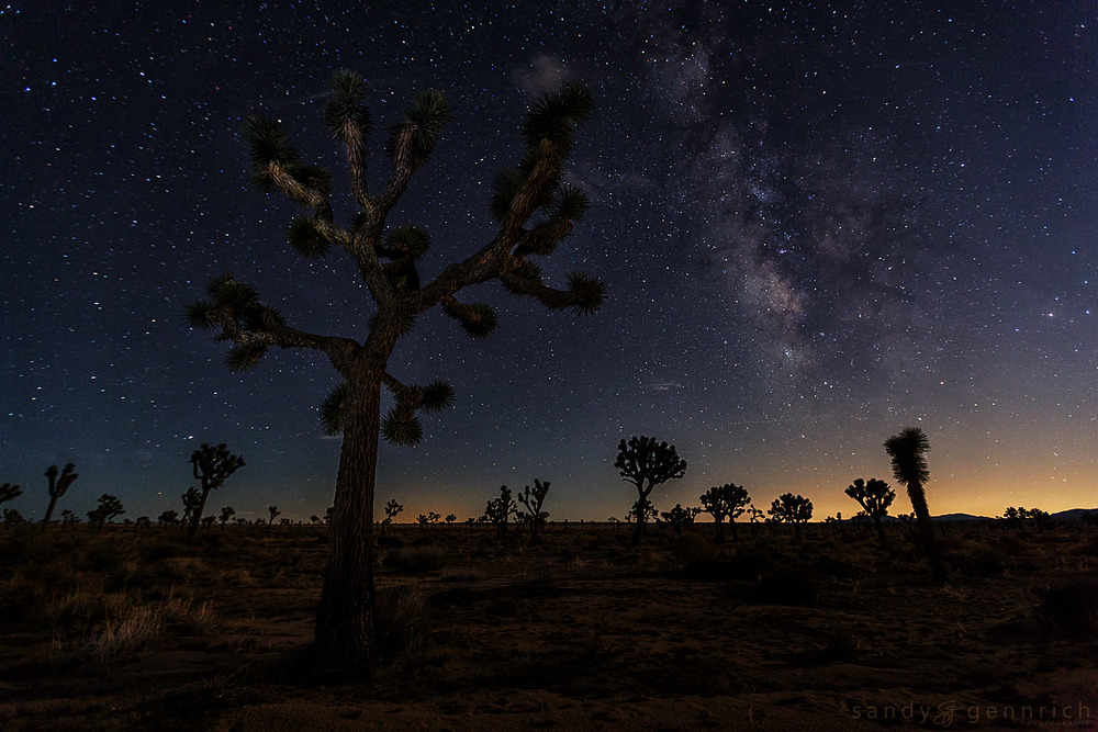 Milky Way and Joshua Trees-Joshua Tree National Park-CA