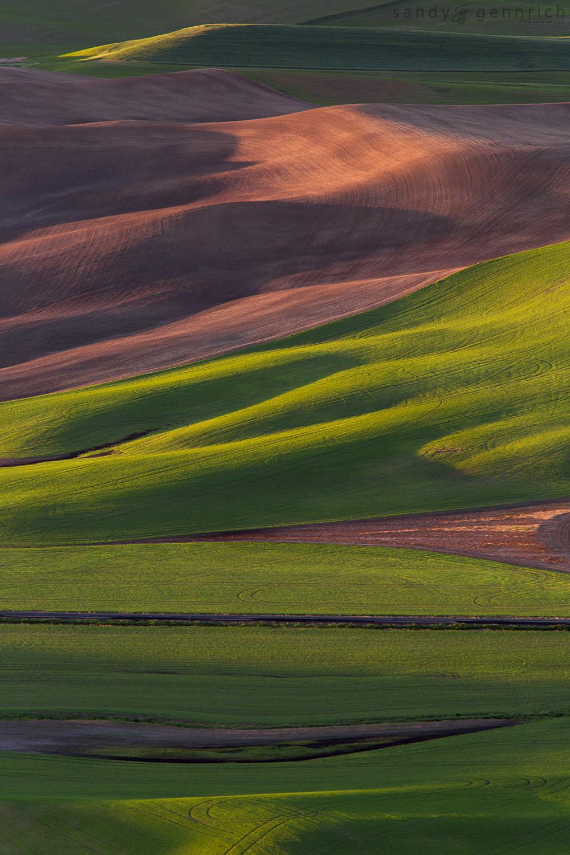 Rolling Farmland - Steptoe Butte - Palouse WA