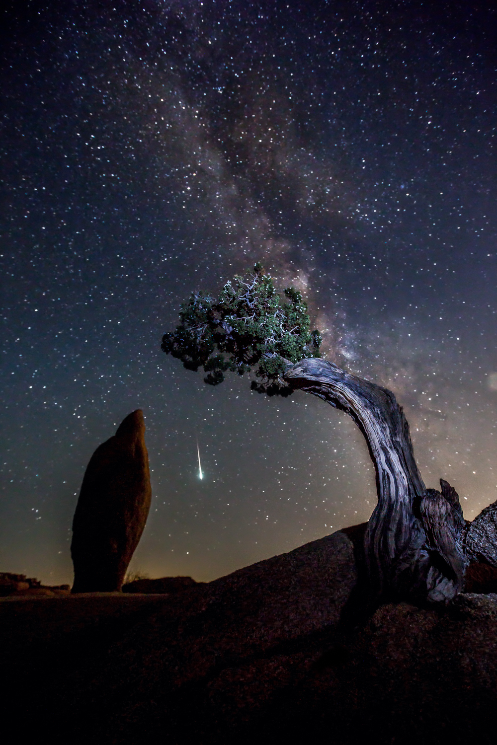 Shooting Star-Joshua Tree National Park-CA