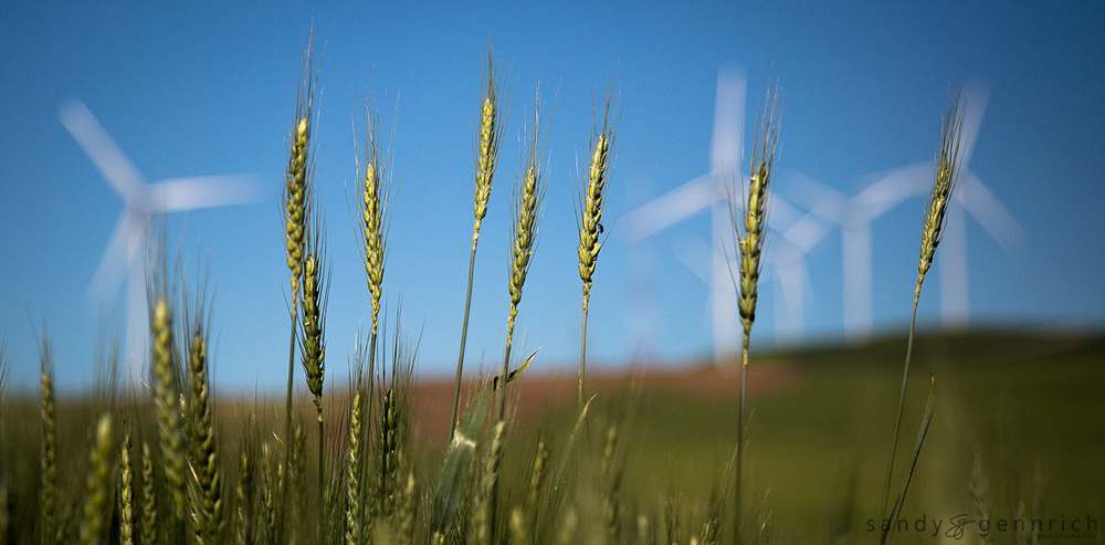Wheat and Windmills - The Palouse - Colfax WA