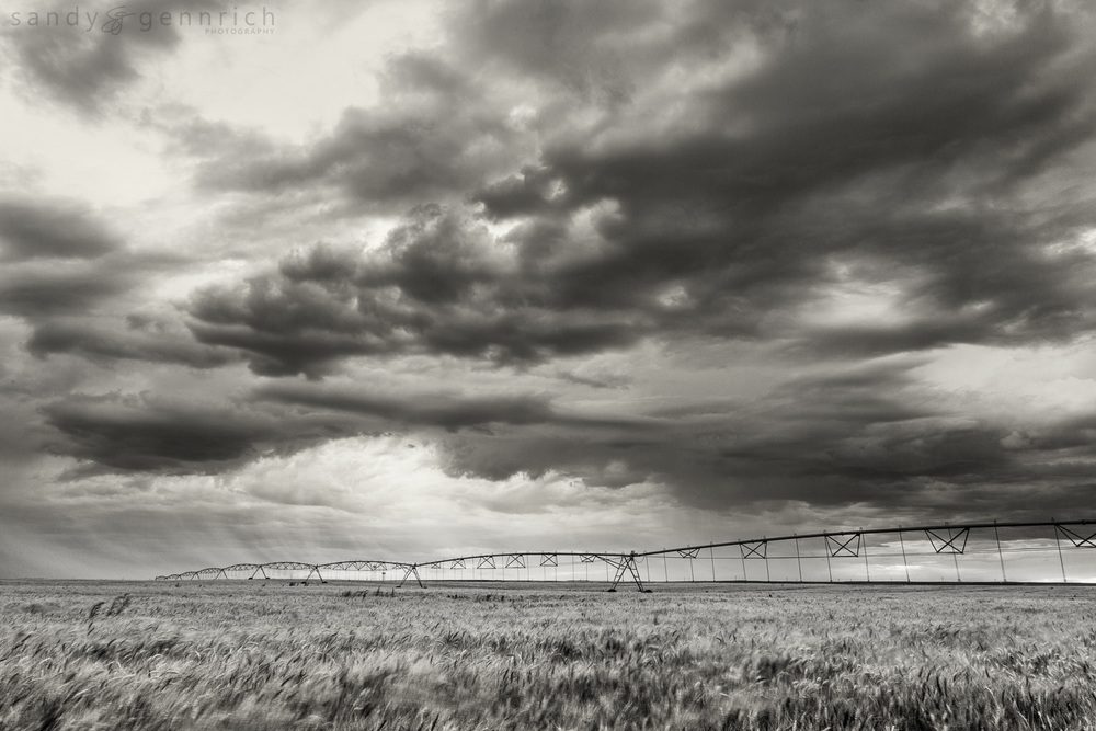 American Farmland - Farmington NM
