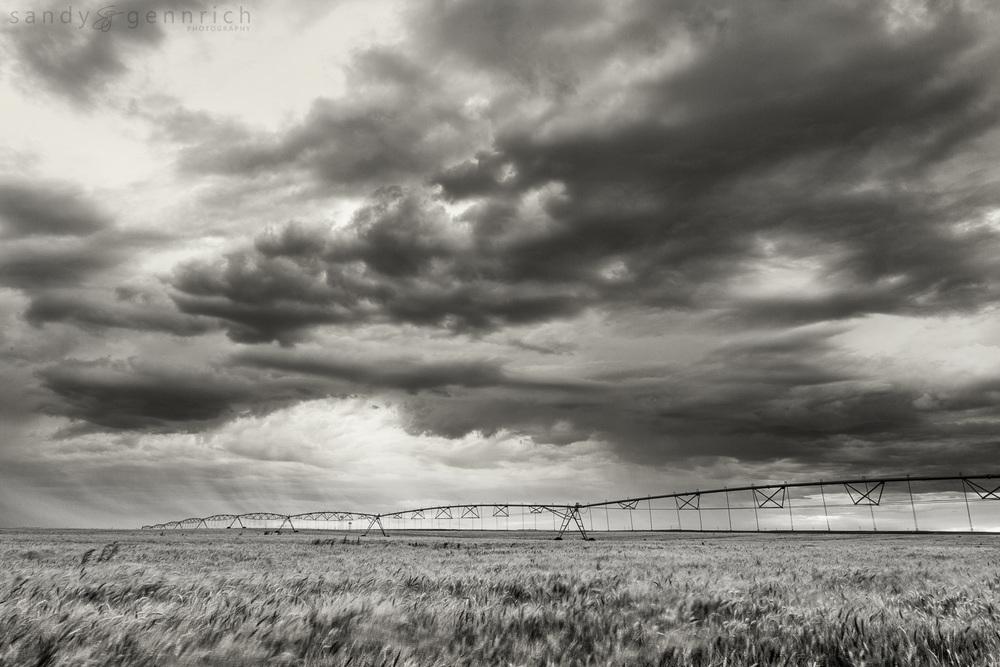 American Farmland - Farmington NM