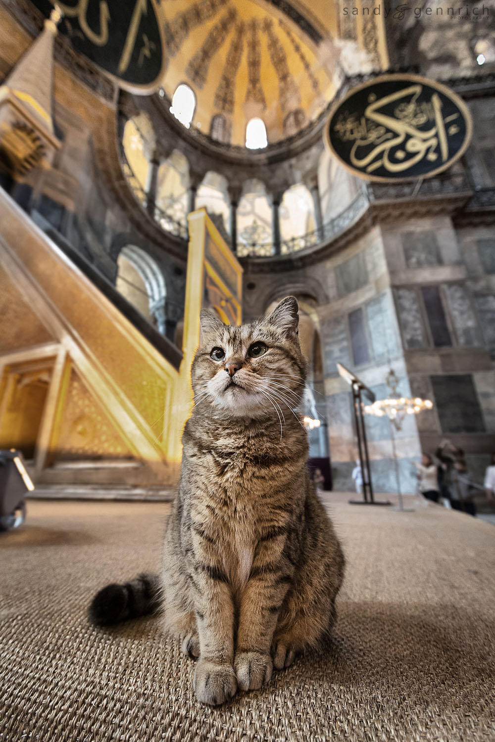 Mascot of the Aya Sophia - Istanbul - Turkey