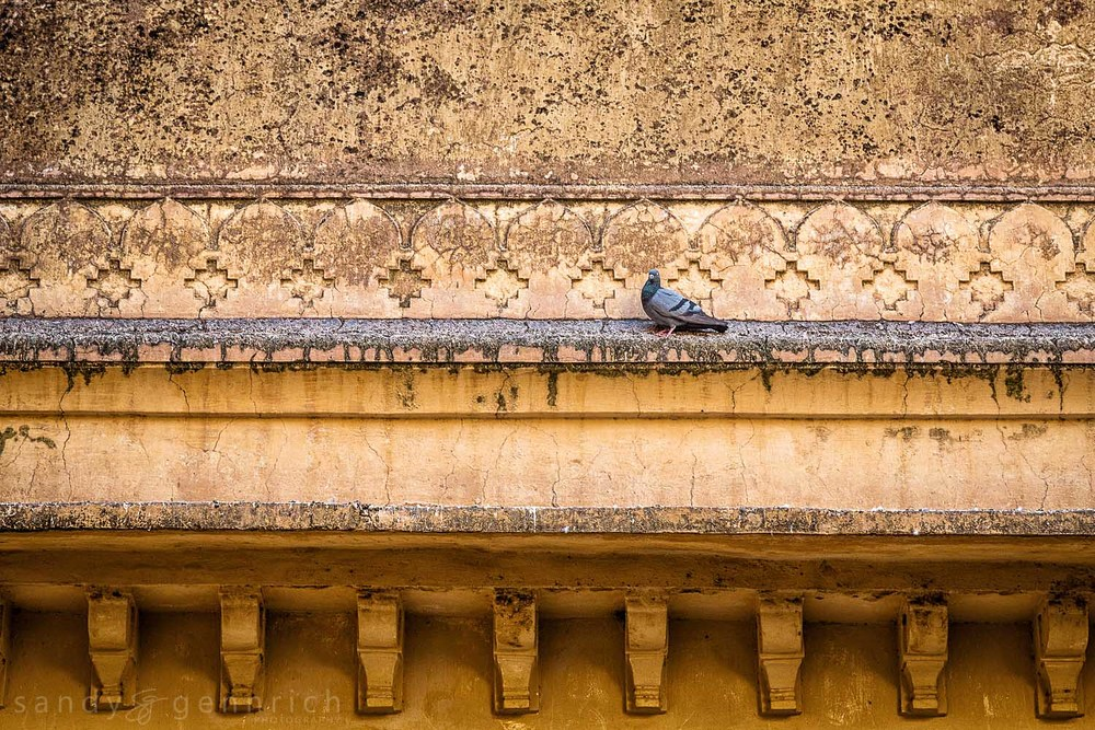 Pigeon and Wall-Fatehpur Sikri