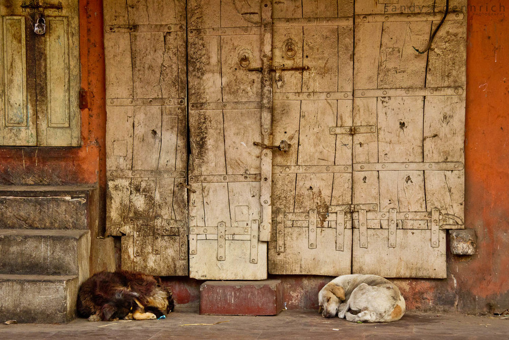 Sleeping Dogs and Detail - Jaipur - Rajastan - India